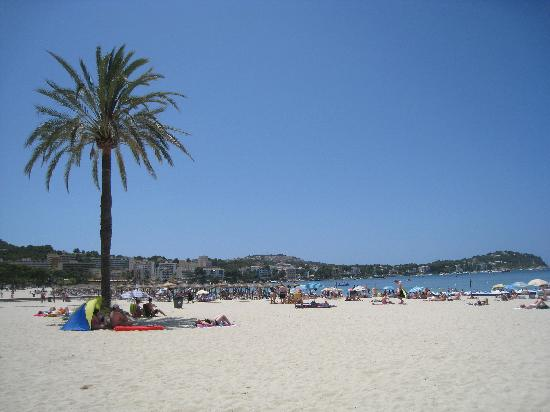 Lovely beach 300m from hotel picture of globales playa for Aparthotel d or jardin de playa santa ponsa