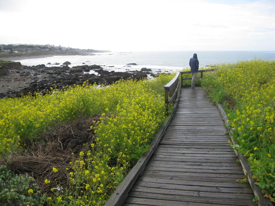 BEST WESTERN PLUS Fireside Inn on Moonstone Beach : The walkway at the beach. 