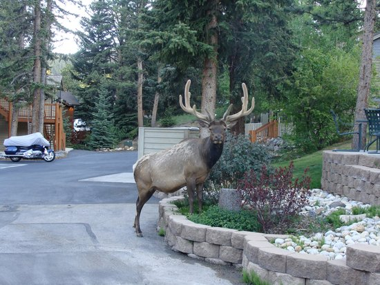 River Stone Resort and Bear Paw Suites: Welcome to River Stone!
