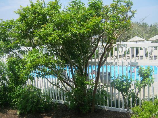 Edgartown, MA: Pool