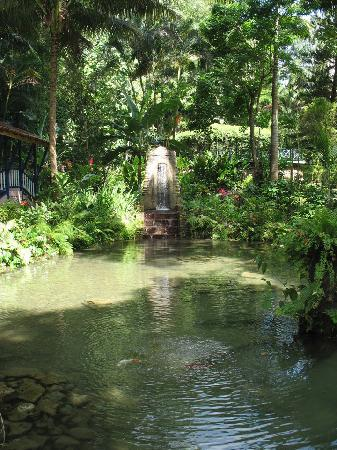 Koi Pond at Coyaba River Gardens and Museum