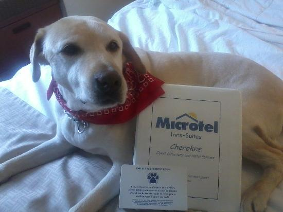 Microtel Inn & Suites by Wyndham Cherokee: Pets Need A Vacation Too!! :)