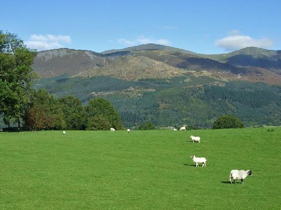 Skiddaw across the field next to Jenkin Hill Cottage