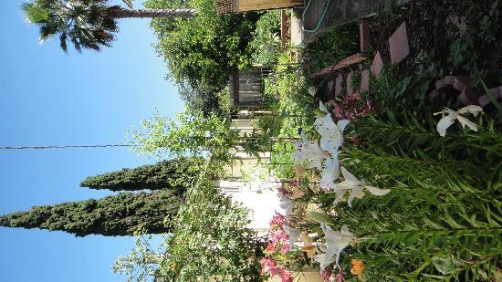 Healdsburg, Californi: kim&#39;s garden