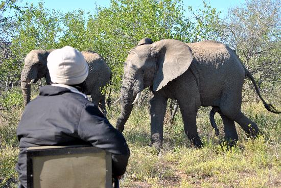 Singwe River Lodge: elephants!