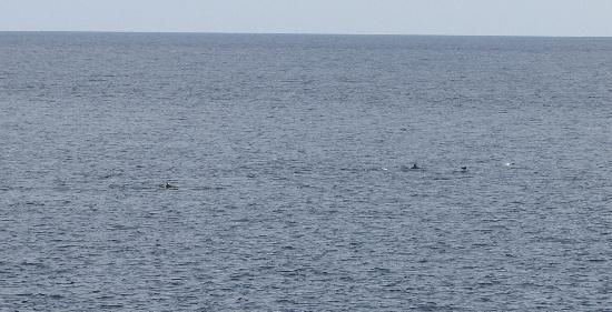 Olhuveli Island: Dolphins playing from restaurant site