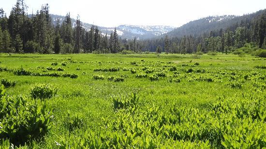 Drakesbad Guest Ranch: The view up-meadow from Drakesbad on June 26, 2011