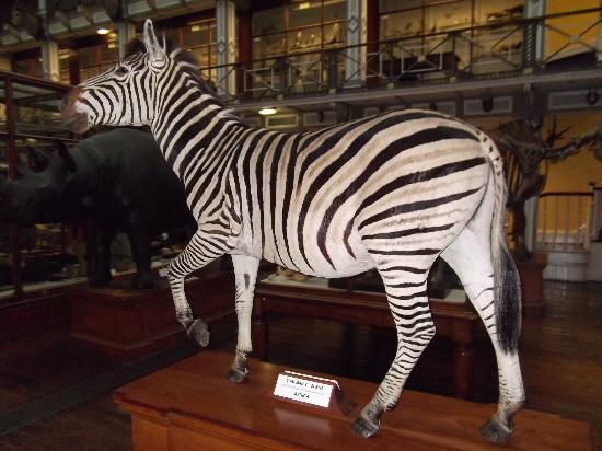 Dubuque Natural History Museum