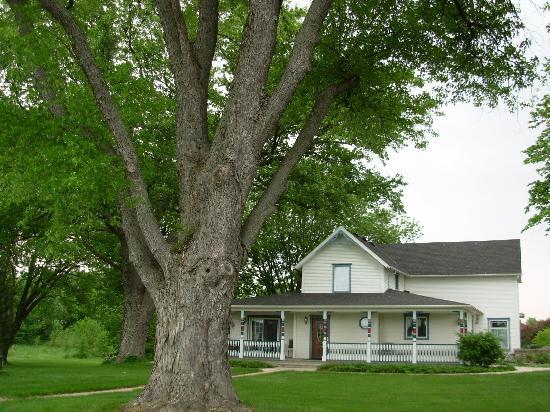 Whispering Winds Retreat Haven: Giant maple in front of house