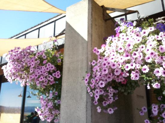 Hood river photos featured images of hood river or - Hanging baskets for balcony ...