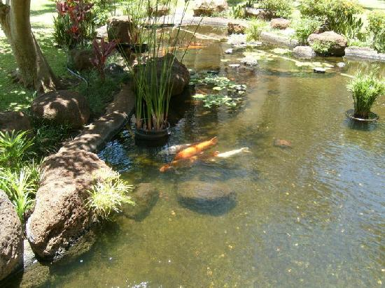 Coy fish pond near restaurant picture of aston kaanapali for Ponds to fish in near me