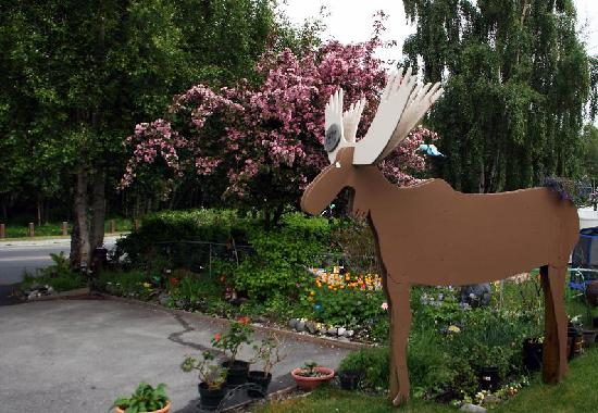 Walkabout Town B&B: Parking, gardens, and our Moose