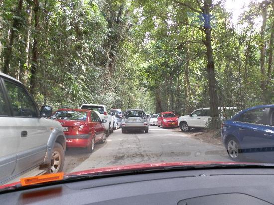 Daintree Region, Australia: Trying to get a carpark
