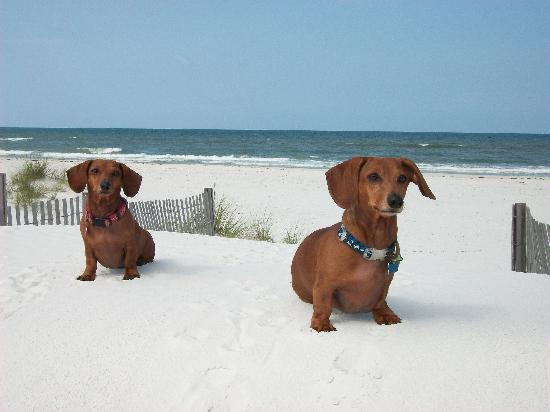 Port Saint Joe, : My weiners loving the snow--oops beautiful white sand!