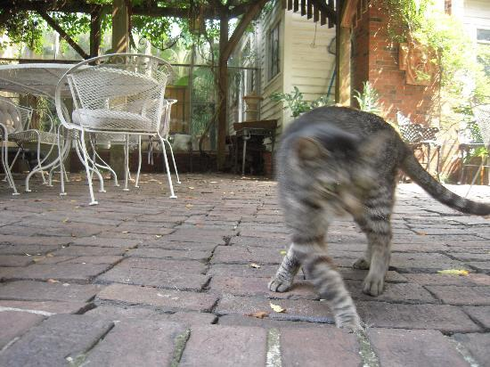 Brunswick Manor: Henry the cat - unofficial greeter