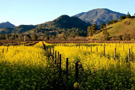 Calistoga Bed and Breakfasts