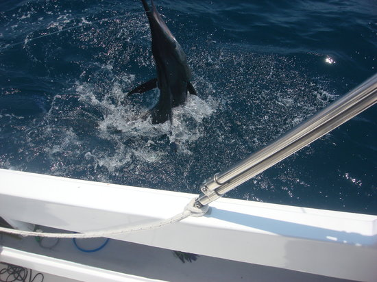 Cabo fishing charters cabo san lucas mexico address for Cabo san lucas fishing charters prices