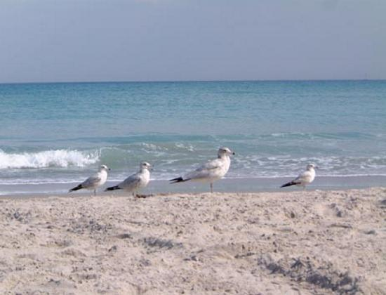 Town &#39;n Country Motor Lodge: Seagull Beach Gulls