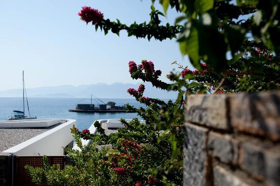 Elounda Beach Hotel: Flowers