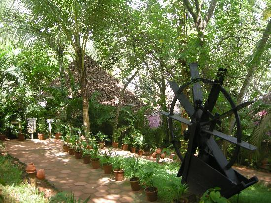 Chowara, India: Garden and Cottage