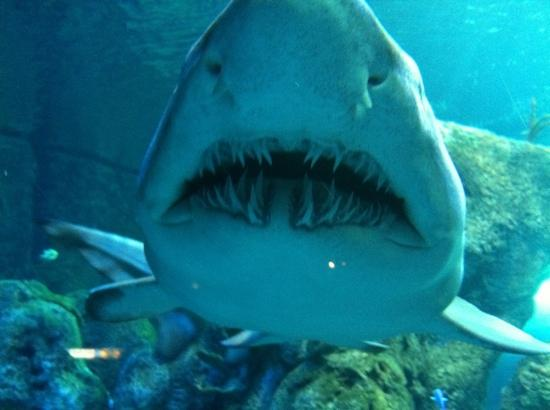 Look At Though 39 S Teeth Picture Of Downtown Aquarium