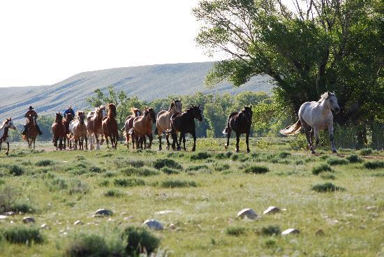 Vee Bar Guest Ranch: Bringing the horses in