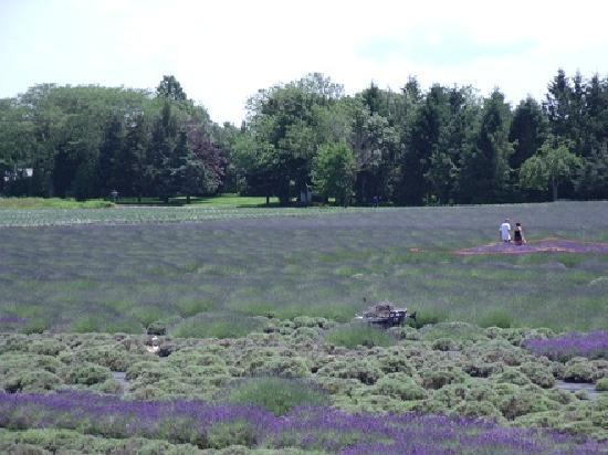 The Blue Inn At North Fork: Lavendar Fields