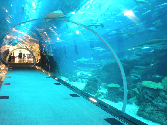 Been to dubai aquarium underwater zoo share your experiences