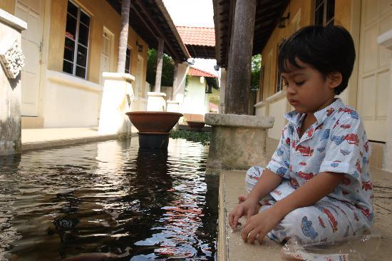 Mayangsari Dungun: Feeding the fish