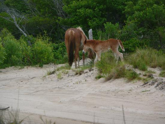 Mom Amp Baby Horse Picture Of Wild Horse Adventure Tours