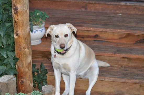 San Isabel Bed and Breakfast: Lucy Dog