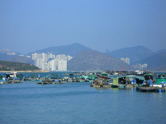 Lamma Island: Traditional boats