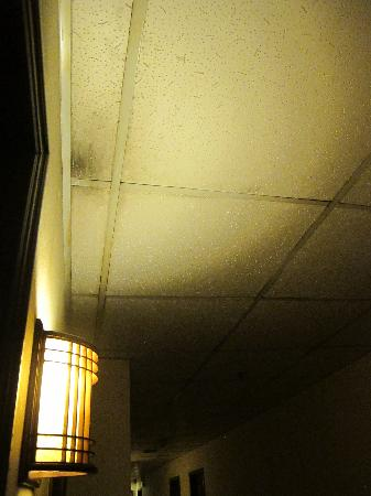 Melody Hotel: Hallway wall and ceiling