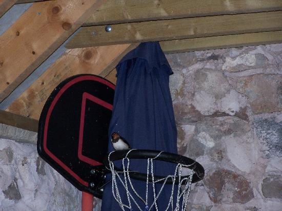 Ringehay Farm Holiday Cottages: The nesting swallows in the laundry