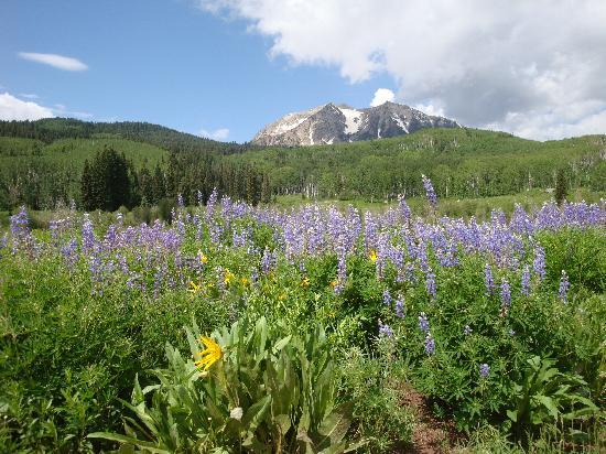 The Ruby of Crested Butte - A Luxury B&B: Mountain biking