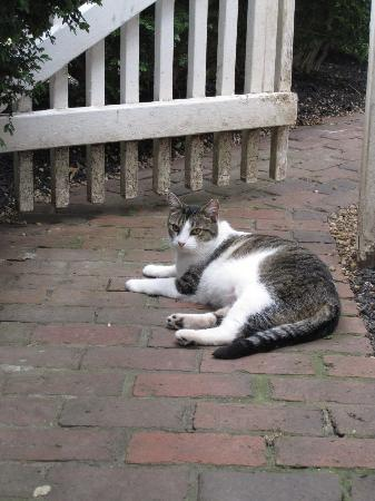 Middleton Inn: One of the house (outdoor) kitties.