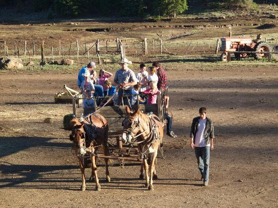 Hayride picture of sprucedale guest ranch alpine for Sprucedale ranch