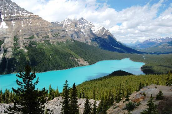 banff and jasper national park map with Locationphotodirectlink G154912 D1090175 I35614118 Peyto Lake Lake Louise Banff National Park Alberta on 222928250274549163 besides Gorgeous Canadian Parks Canadas 150th Anniversary furthermore A Mothers Love additionally LocationPhotoDirectLink G154912 D1090175 I35614118 Peyto Lake Lake Louise Banff National Park Alberta also Attraction Review G154918 D184575 Reviews Athabasca Falls Jasper Jasper National Park Alberta.