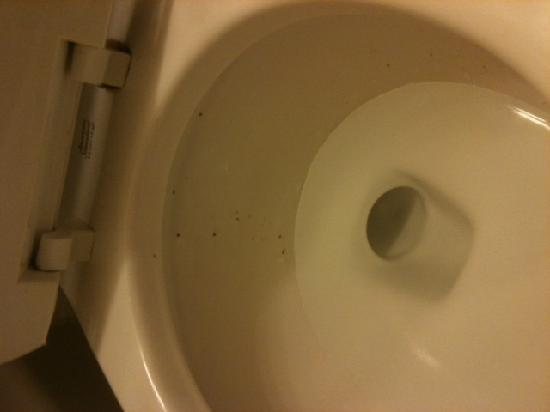 Knights Inn and Suites Virginia Beach: dirty toilet
