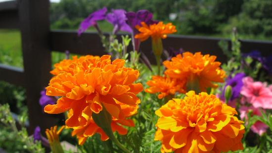 Cape Cod Ocean Manor: Flowers on the rear deck of the Ocean Manor Inn