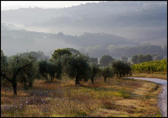 Early morning sun and mist at Tenuta Pizzogallo