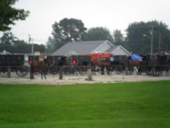 BEST WESTERN Inn: Amish Buggies