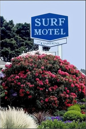 Surf Motel and Gardens: &quot;The Sign&quot;