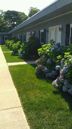 Santuit Inn exterior - gorgeous Hydrangeas!