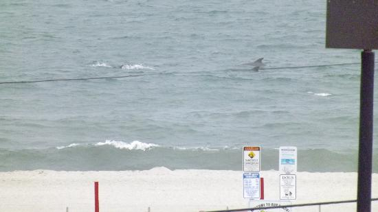 Camelot Motel: Zoom in to see the dolphins from your room!