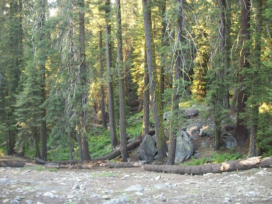 Dorst Campground: The backside of Campsite #15