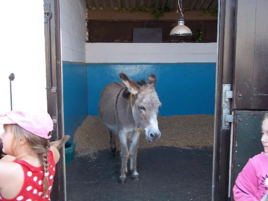 Sidmouth, UK: You can pet the donkeys and learn about their care