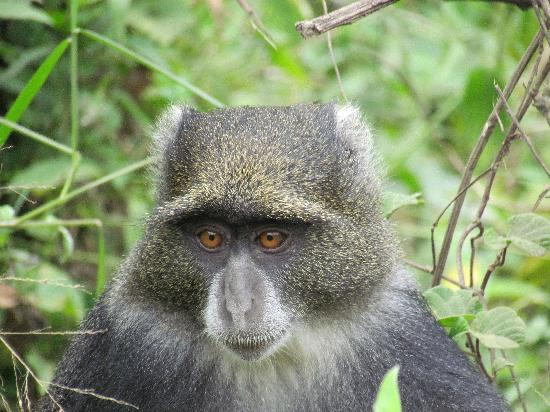 Hatari Lodge: monkey