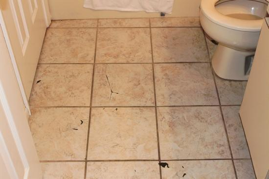 Get rid of roaches how to get rid of cockroaches in bathroom for One cockroach in bathroom