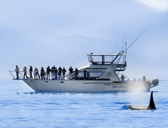 SpringTide Whale Watching & Charters